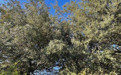 PYLA-SUR-MER – Vente confidentielle d'une villa totalement rénovée